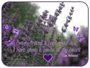 LWE - piece of my heart
